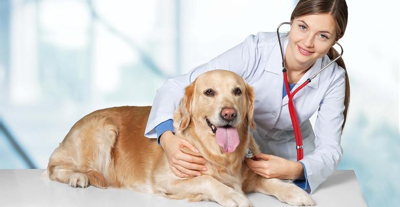 سلامت نگهداشتن حیوانات